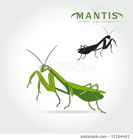 Green Mantis Vector 31504481
