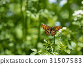 watercress, butterfly, butterflies 31507583