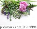 芳香 药物疗效 炼油 31509994