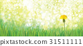 Vector  yellow  dandelion nature  background. 31511111