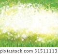grass, nature, summer 31511113