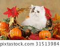 autumn cat fall 31513984