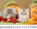 Persian kitten in fall decoration 31513989