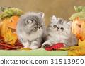 autumn cat fall 31513990