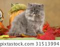 autumn cat fall 31513994