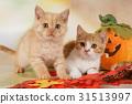autumn cat cats 31513997