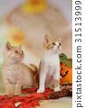 autumn cat cats 31513999
