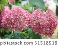 繡球花 花朵 花 31518919