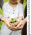 garden, green, greenery 31520591