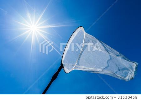 """藍天和昆蟲網""""夏天圖像"""" 31530458"""