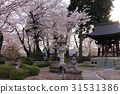 temple, temples, grounds 31531386