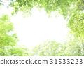 6 월의 신록 이바라키 현 나카시 31533223