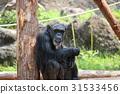 黑猩猩 動物 猴子 31533456