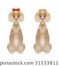dog, dogs, poodle 31533811