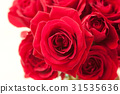 장미, 장미꽃, 로즈 31535636