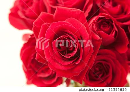 玫瑰花 玫瑰 薔薇 31535636