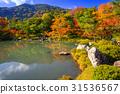 arashiyama,autumn,kyoto 31536567