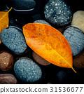 Autumn season and peaceful concepts.  31536677