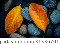 Autumn season and peaceful concepts.  31536701
