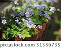 flower bed 31536735