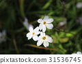 flower bed 31536745