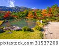 arashiyama, autumn, kyoto 31537209