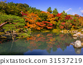 arashiyama, autumn, kyoto 31537219