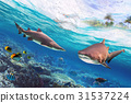 Tropical water with dangerous bull sharks 31537224