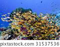 海底的 海裡 水下照片 31537536
