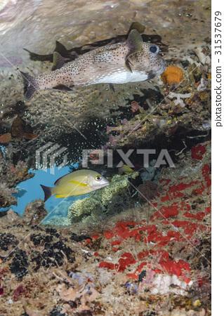 海底的 海裡 水下照片 31537679