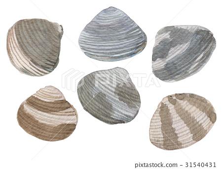 手绘水彩蛤蜊蛤蜊 31540431