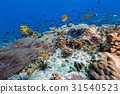 Butterfly fish in the coral reef 31540523