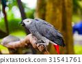 parrot, macaw, bird 31541761