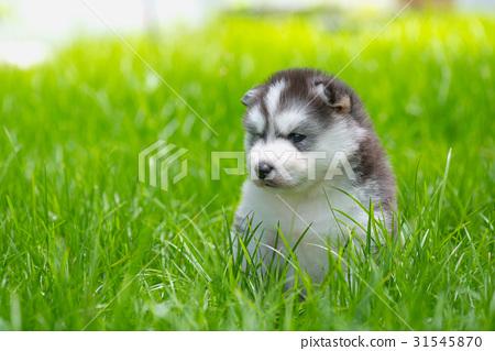 Puppy in the garden 31545870