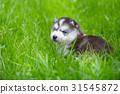 Puppy in the garden 31545872
