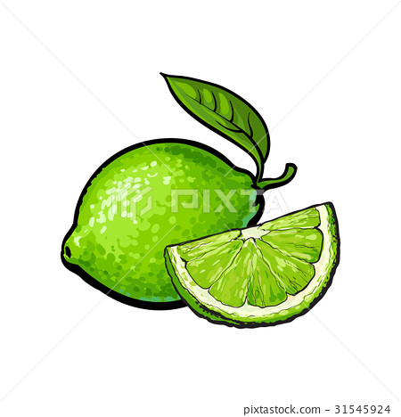 Whole and quarter of unpeeled green lime, sketch 31545924