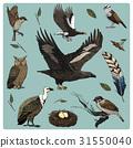 hand drawn vector realistic bird, sketch graphic 31550040