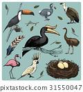 hand drawn vector realistic bird, sketch graphic 31550047