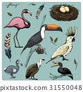 hand drawn vector realistic bird, sketch graphic 31550048