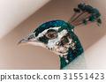 portrait, peacock, head 31551423