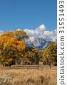 Teton Fall Landscape 31551493