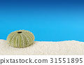 Green sea urchin shell, white sand 31551895