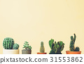 Cactus tops on a muted yellow background 31553862