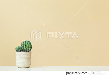 Cactus on a yellow background 31553865