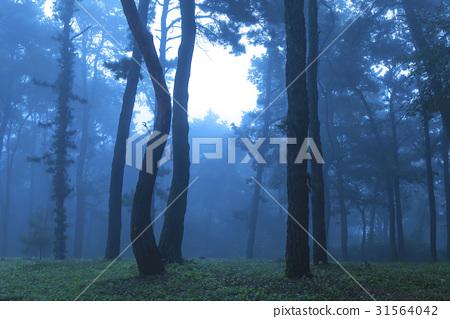 소나무,충주시,충북 31564042