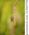 곤충, 농작물, 메뚜기 31564746