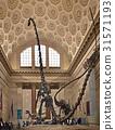 自然歷史博物館,曼哈頓,紐約,美國 31571193