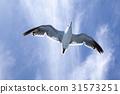 海鷗 雲 低角度 31573251