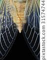 곤충, 날개, 매미 31574744