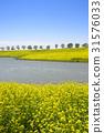 유채밭,순천만정원,순천시,전남 31576033